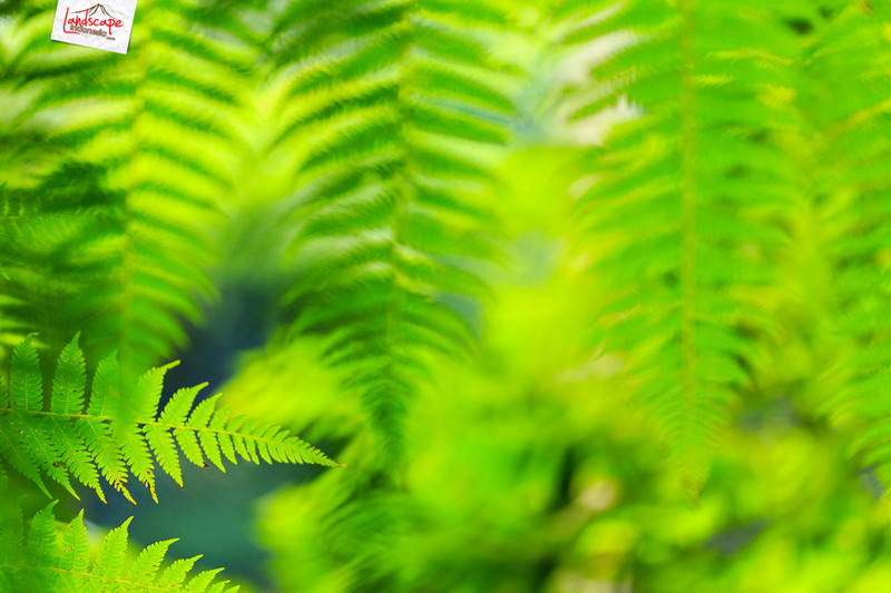 green - Belajar slow speed di Jumog