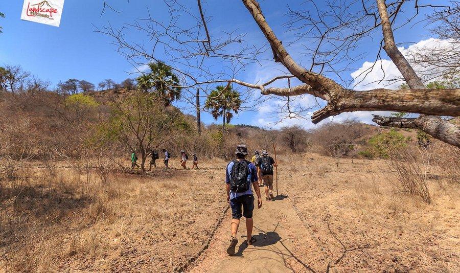 komodo pesonaindonesia 18 tn - Bertemu Sang Naga di pulau Komodo
