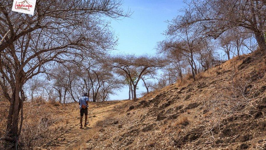 komodo pesonaindonesia 19 tn - Bertemu Sang Naga di pulau Komodo