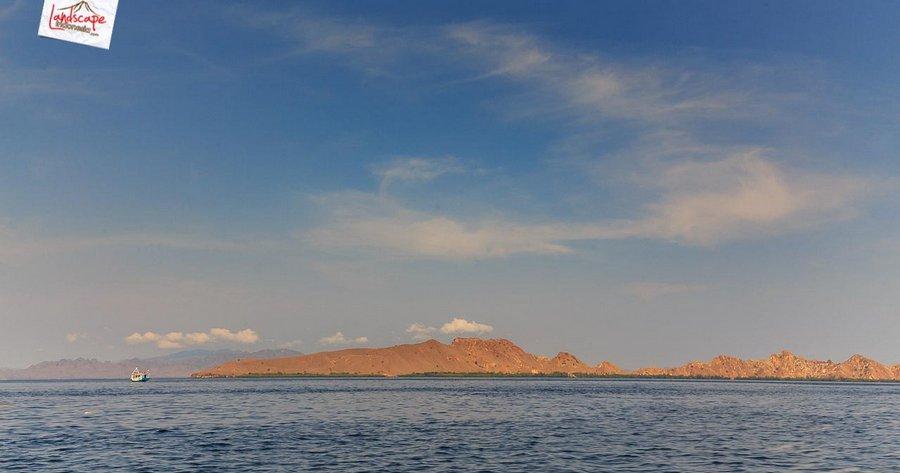komodo pesonaindonesia 2 tn - Bertemu Sang Naga di pulau Komodo