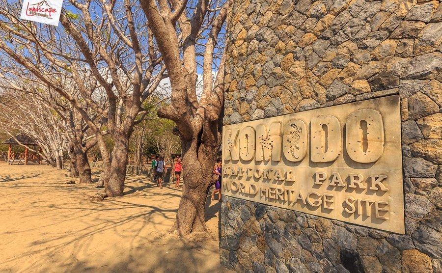 komodo pesonaindonesia 6 tn - Bertemu Sang Naga di pulau Komodo