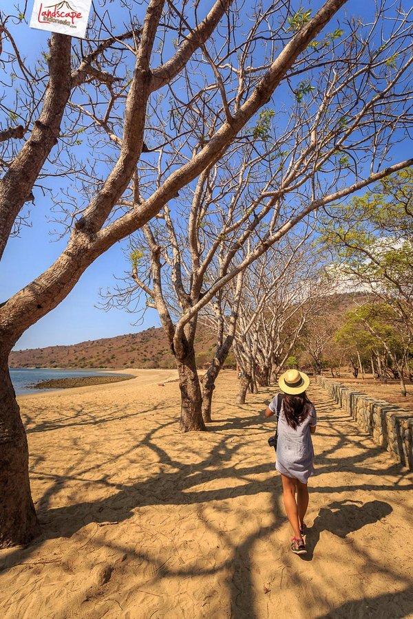 komodo pesonaindonesia 7 tn - Bertemu Sang Naga di pulau Komodo
