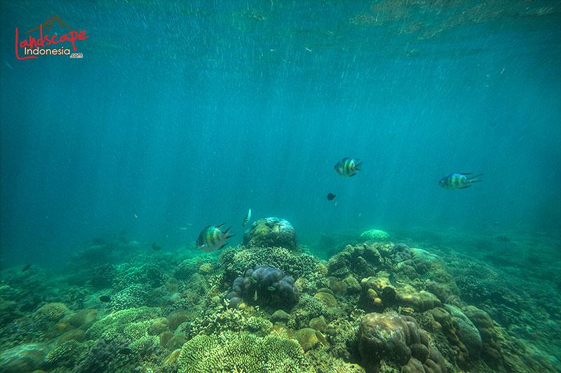 lombok barat 17 - lombok (still) hidden paradise - hari ke 4 - snorkling time