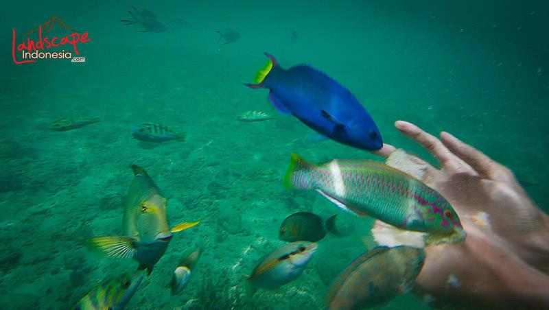 lombok barat 20 - lombok (still) hidden paradise - hari ke 4 - snorkling time