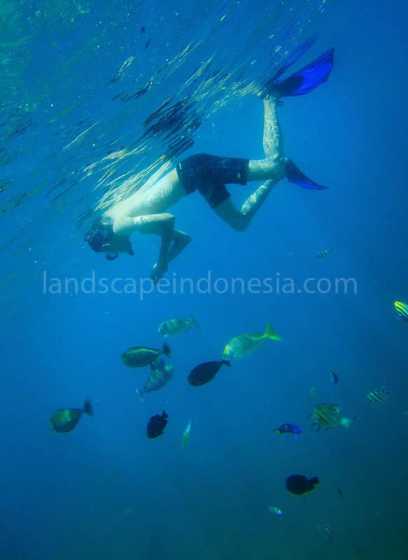lombok barat 60 - lombok (still) hidden paradise - hari ke 4 - snorkling time