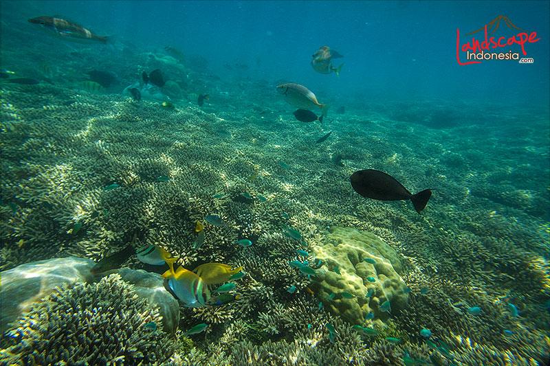 lombok barat 61 - lombok (still) hidden paradise - hari ke 4 - snorkling time