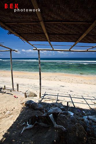anjing bangko - lombok (still) hidden paradise (2 siang)