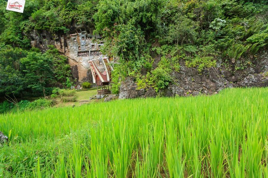 toraja 06 - Toraja - Budaya di Atas Awan