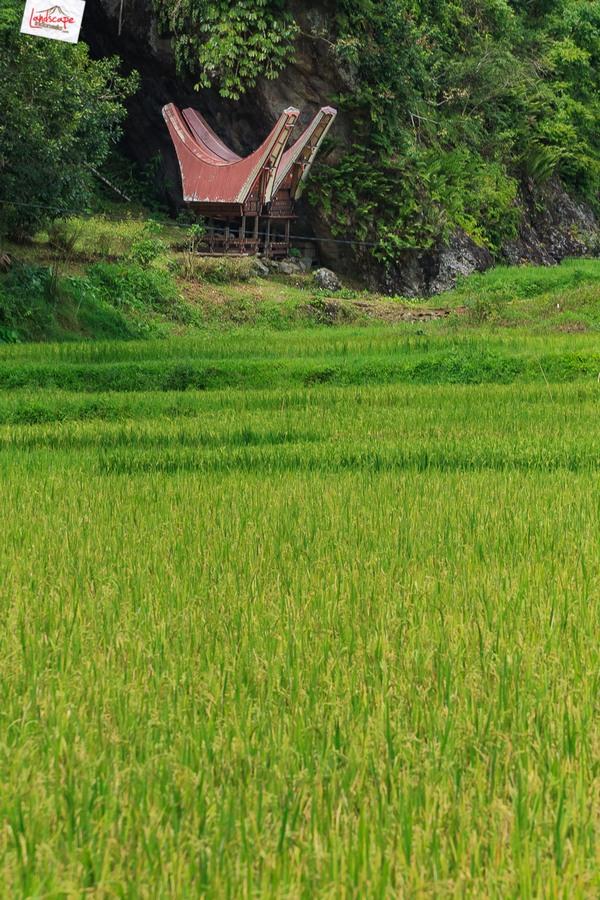 toraja 08 - Toraja - Budaya di Atas Awan