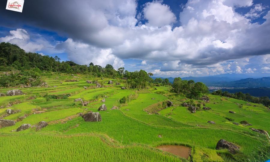 toraja 26 - Toraja - Budaya di Atas Awan