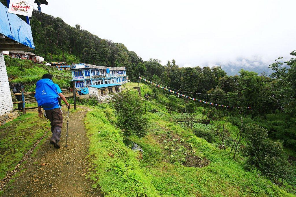 nepal tadapani 2 - Annapurna Basecamp : Tadapani - Chomrong (hari keempat)