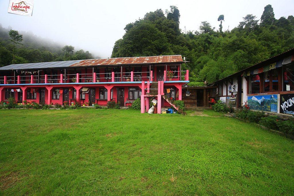 nepal tadapani 3 - Annapurna Basecamp : Tadapani - Chomrong (hari keempat)