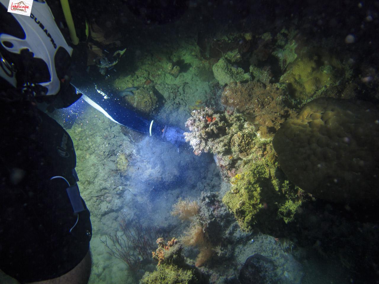 night dive 6503 - Night Dive di Pulau Pramuka