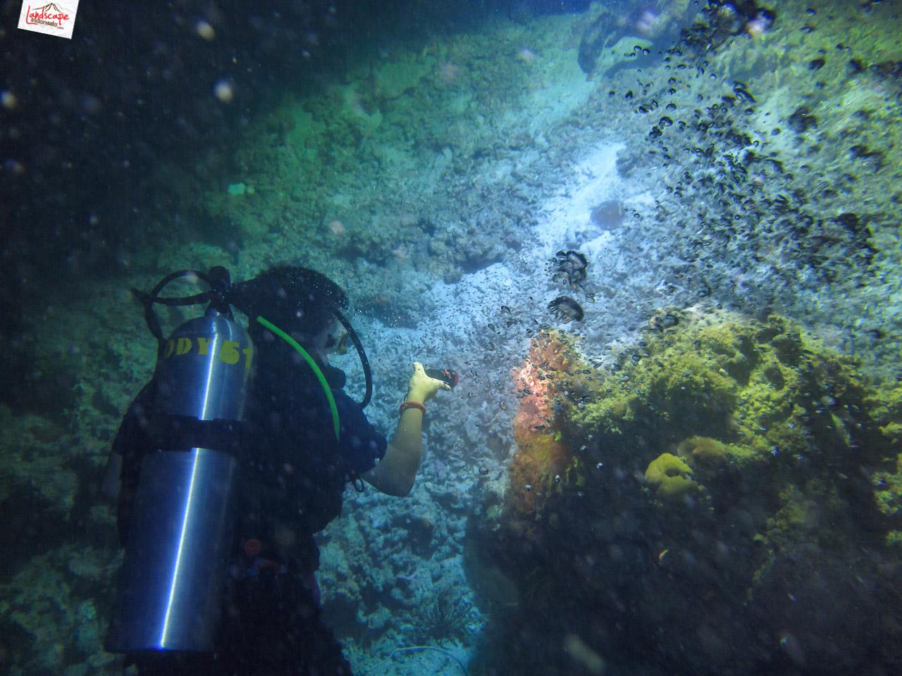night dive 6527 - Night Dive di Pulau Pramuka