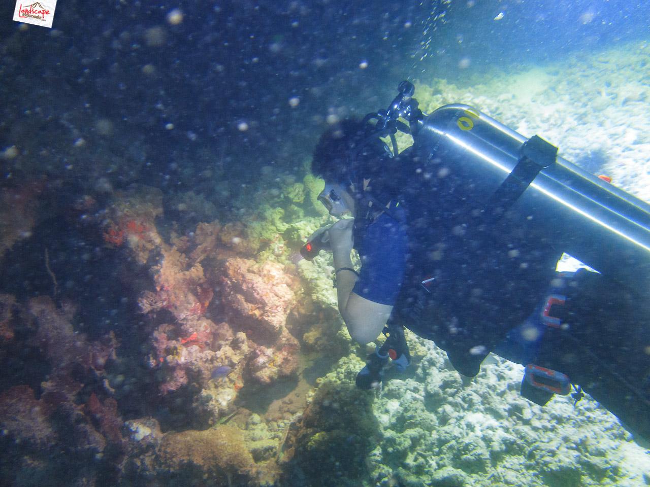 night dive 6534 - Night Dive di Pulau Pramuka