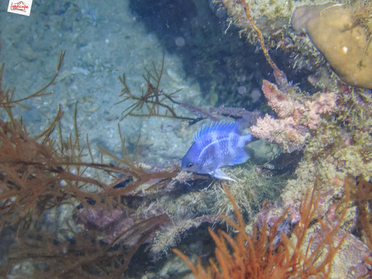 night dive 6537 2 - Night Dive di Pulau Pramuka