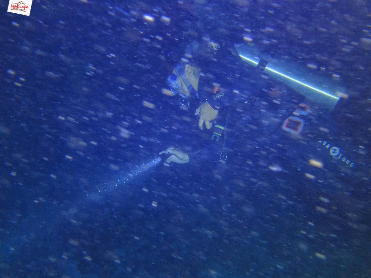 night dive 6577 - Night Dive di Pulau Pramuka