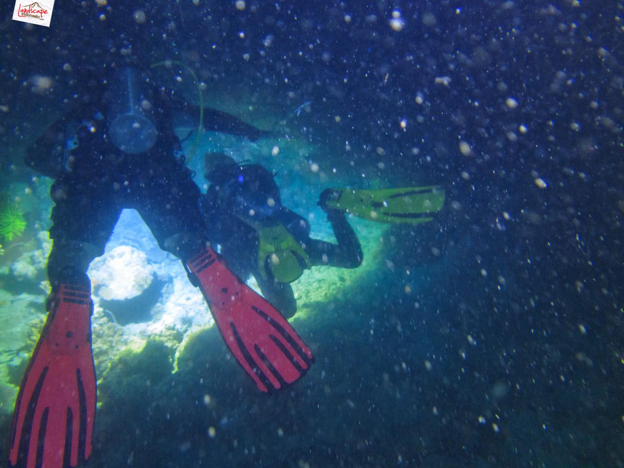 night dive 6580 - Night Dive di Pulau Pramuka