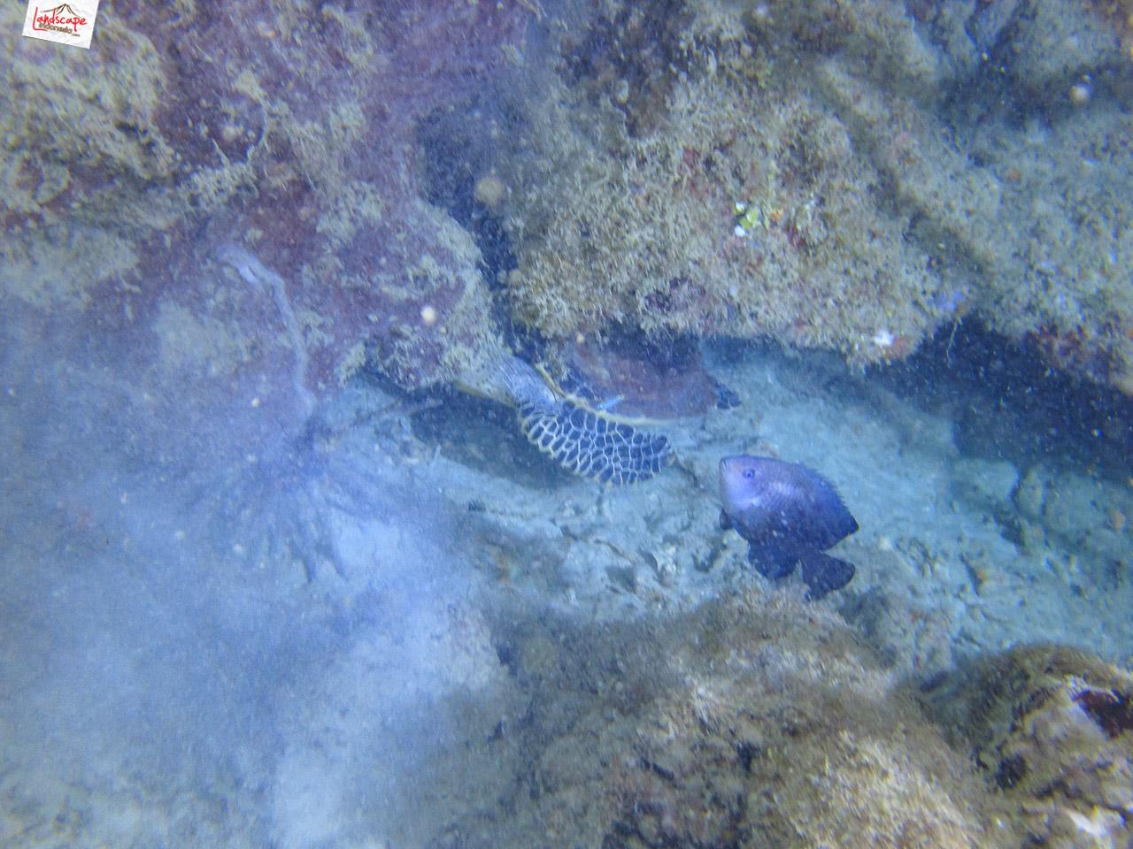 night dive 6593 - Night Dive di Pulau Pramuka