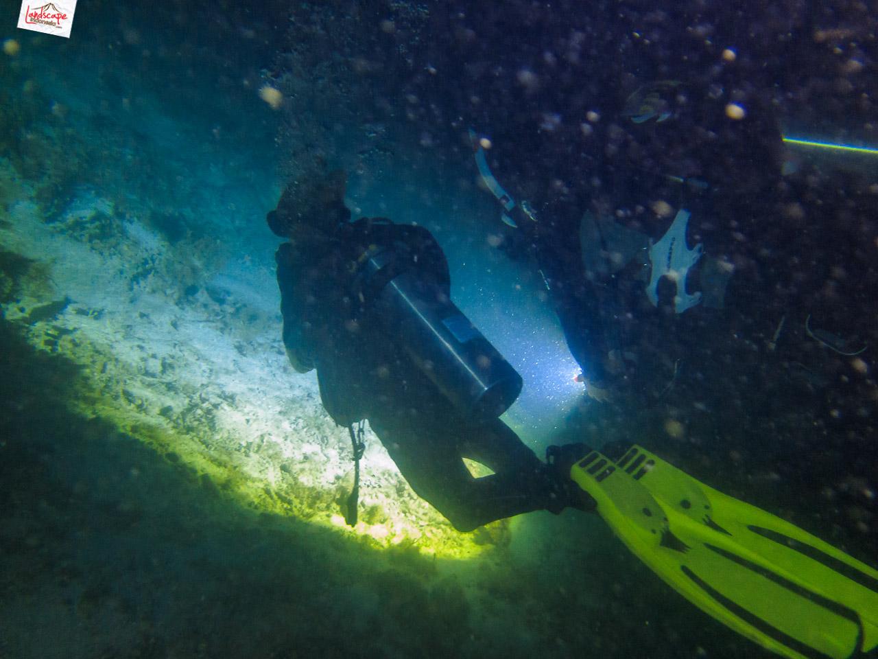 night dive 6607 - Night Dive di Pulau Pramuka
