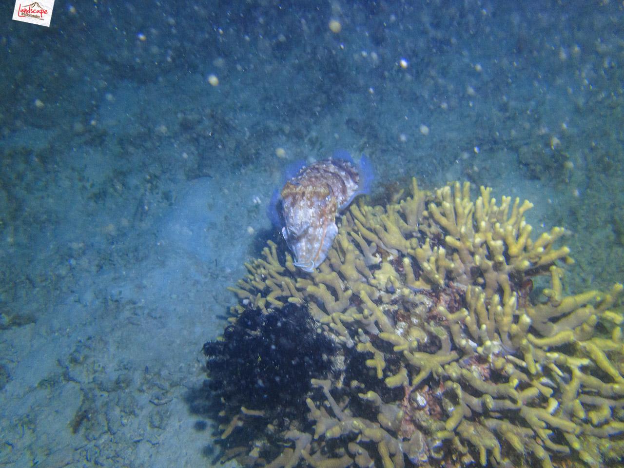 night dive 6609 - Night Dive di Pulau Pramuka