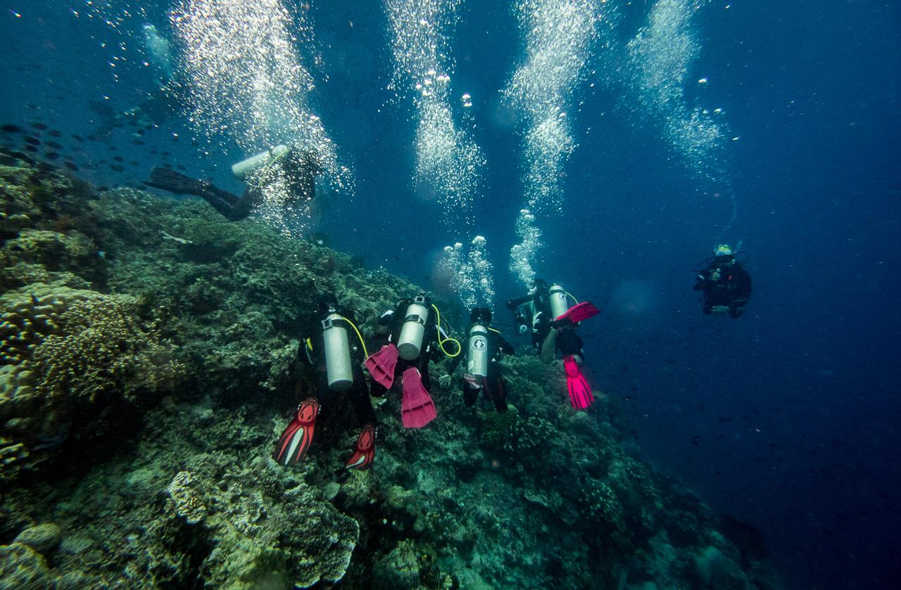 P1120606 - [Ebook] Manado : dive trip