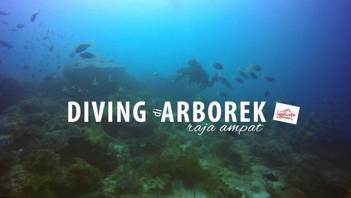diving di arborek, raja ampat