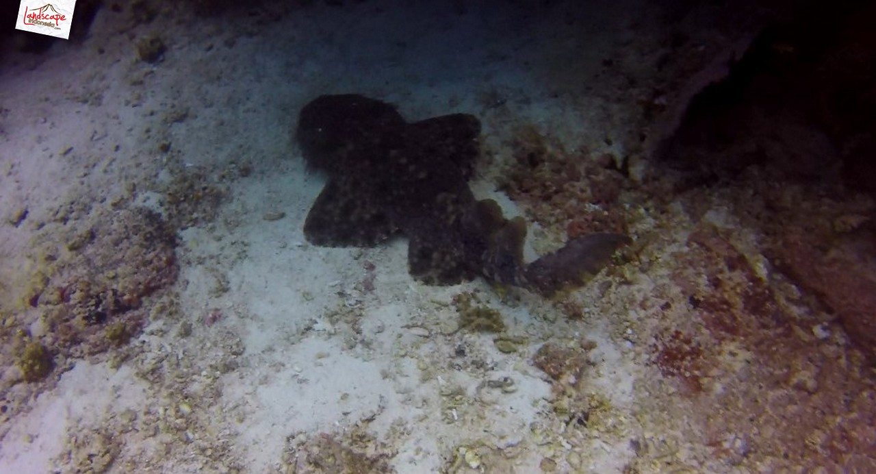 diving di arborek 4 - Diving di Arborek, Raja Ampat