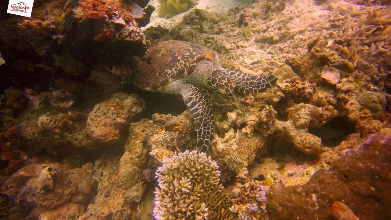 diving di arborek 5 - Diving di Arborek, Raja Ampat
