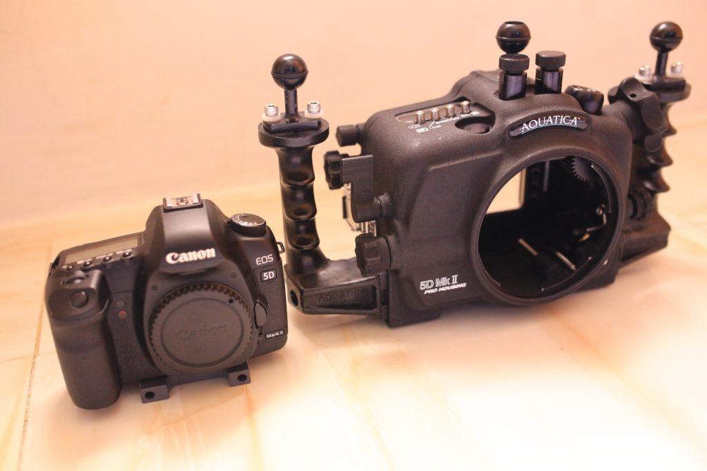 5daquatica 1 1024x683 - Memilih Kamera Underwater | Underwater Photo Journey