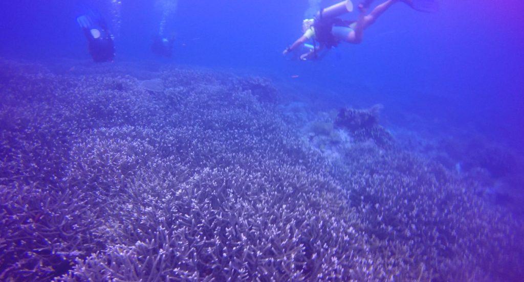 Screenshot 65 1024x552 - Memilih Kamera Underwater | Underwater Photo Journey
