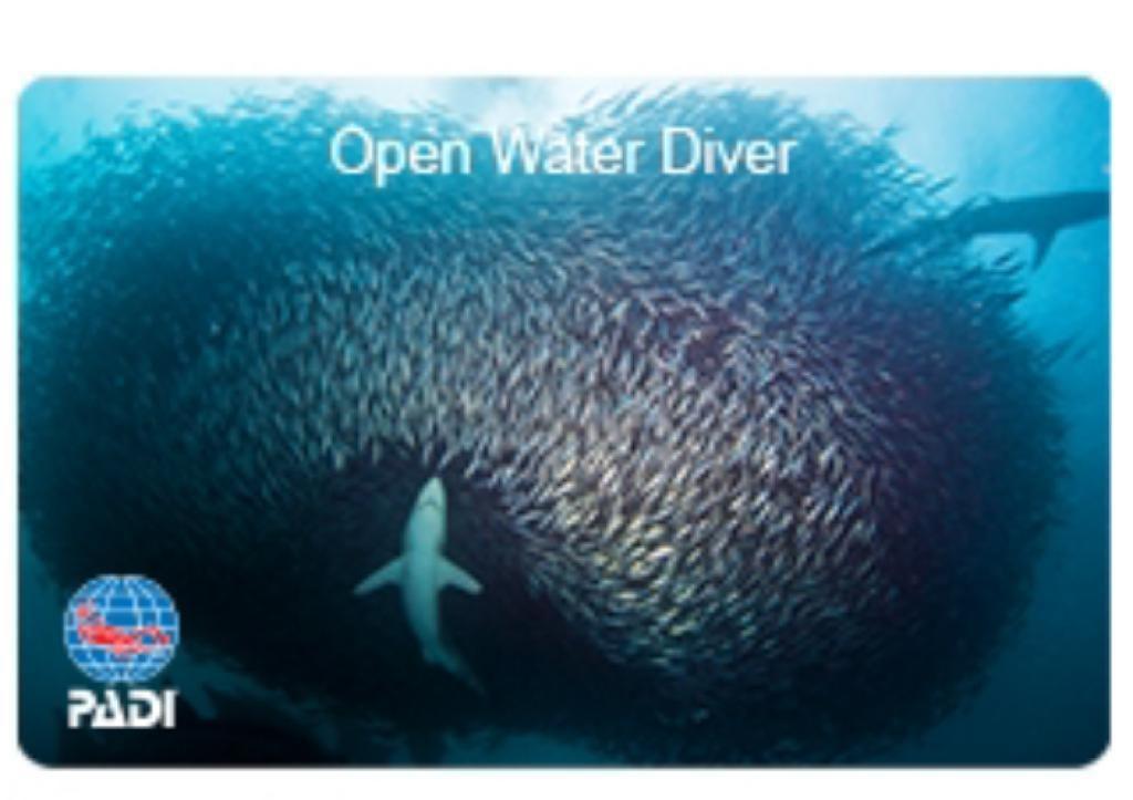 WhatsApp Image 2019 04 20 at 12.30.15 1024x723 - Discovery Scuba Diving di Wakatobi