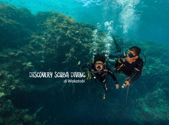 diving di wakatobi 0 560x416 - Discovery Scuba Diving di Wakatobi