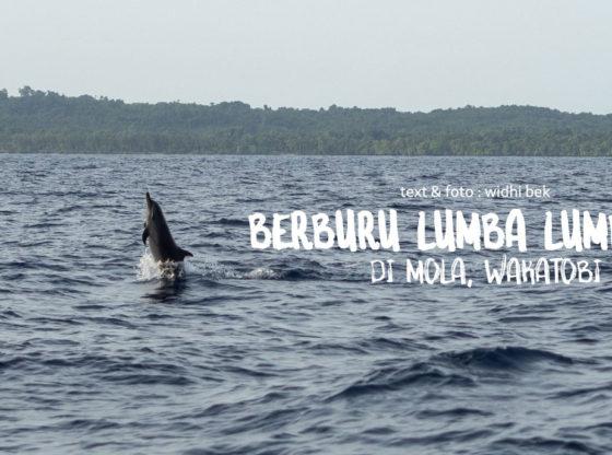 "lumba lumba mola wakatobi 09a 560x416 - ""Berburu"" Lumba Lumba di Bajo Mola"