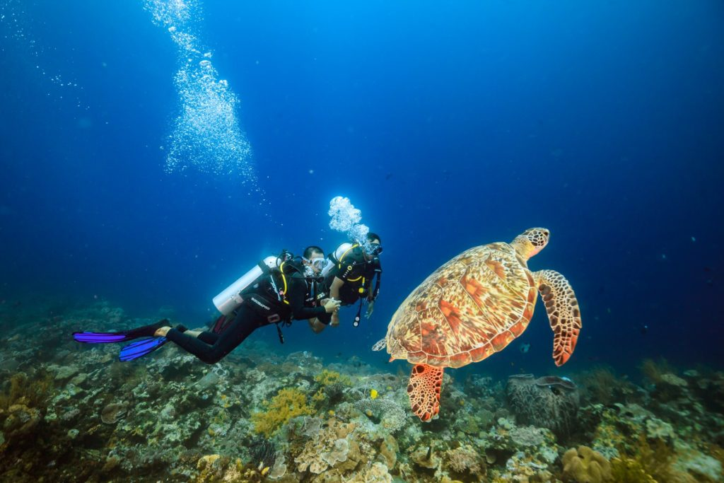 tomiai 60 1024x683 - Memilih Kamera Underwater | Underwater Photo Journey