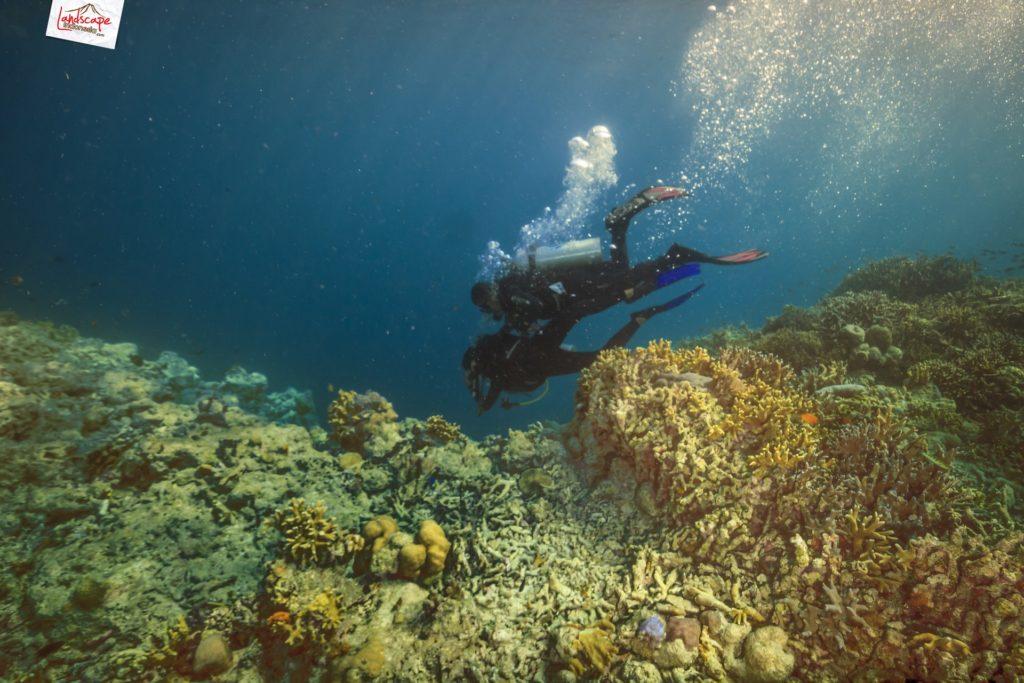 tryscuba wakatobi 05 1024x683 - Discovery Scuba Diving di Wakatobi
