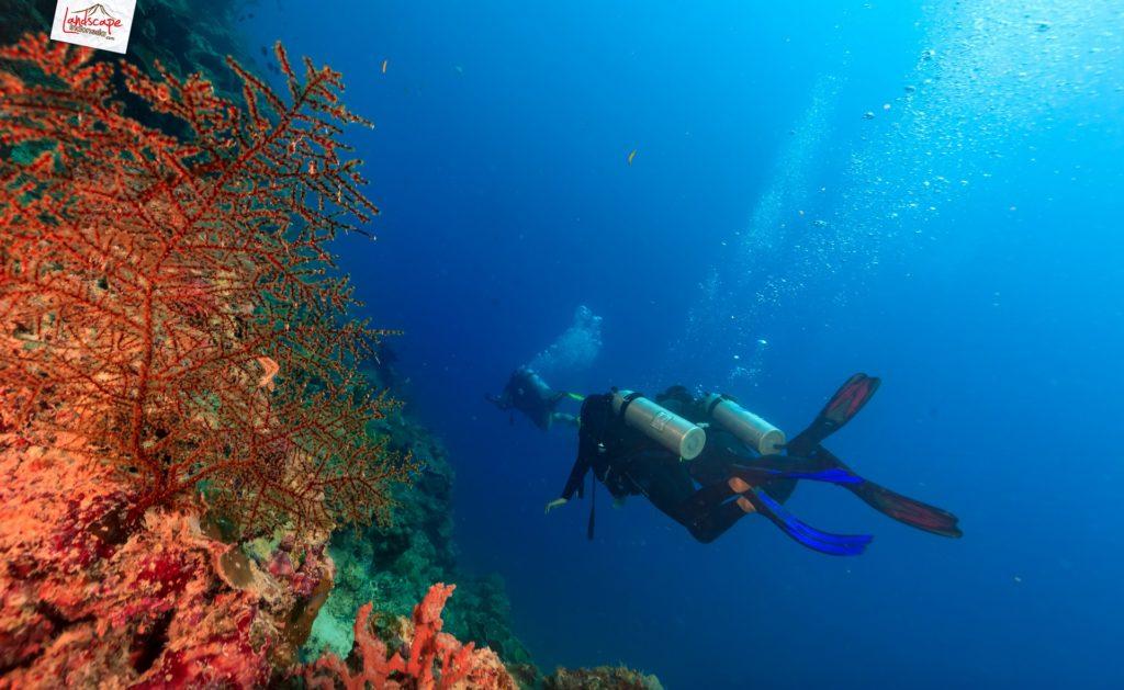 tryscuba wakatobi 10 1024x629 - Discovery Scuba Diving di Wakatobi