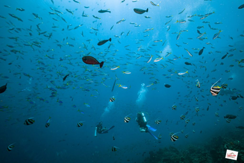 IMG 7367 tn 1024x683 - Diving di Komodo
