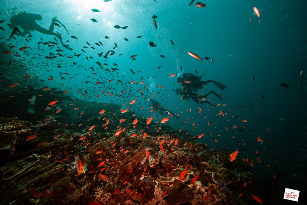 batu bolong 6648 tn 1024x683 - Diving di Komodo