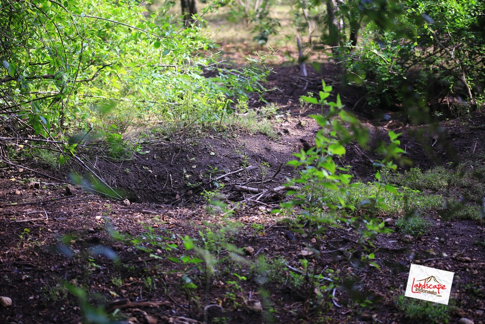 komodo d2 32 - Komodo Day 2 : Bertemu Komodo di Rinca