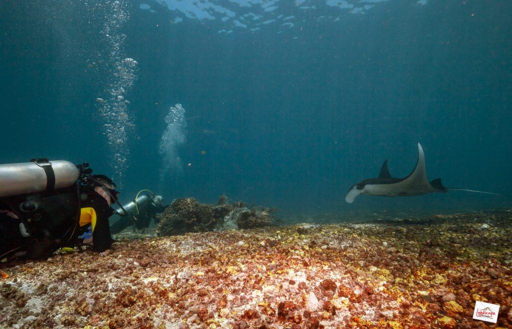 manta point 6923 tn 1024x657 - Diving di Komodo