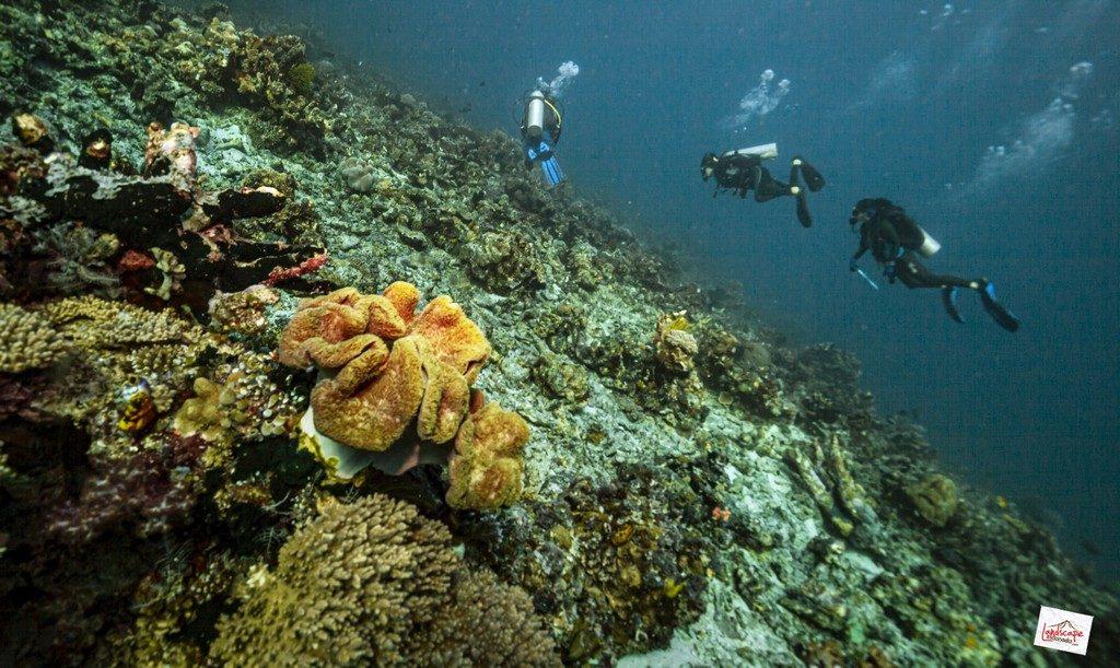 komodo6 d6 05 1024x611 - Digoyang Arus Komodo | Dive Trip | 6D5N | 8-13 Juni