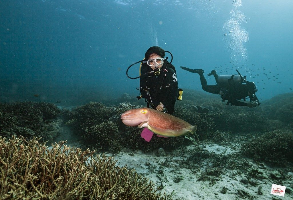 komodo6 d6 13 1024x701 - Digoyang Arus Komodo | Dive Trip | 6D5N | 8-13 Juni
