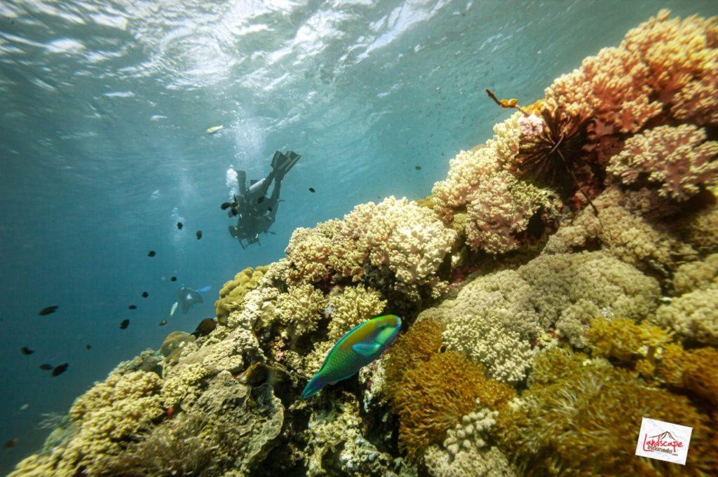 komodo d70 41 1024x681 - 10 Diving Spot di Komodo pilihan WidhiBek