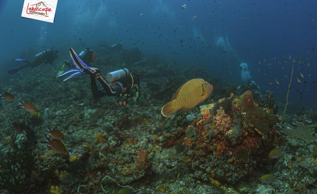 IMG 1217 1024x627 - 10 Diving Spot di Komodo pilihan WidhiBek