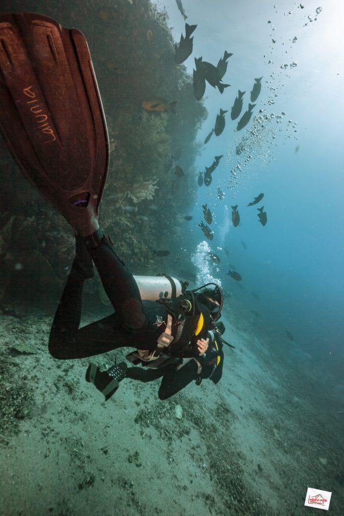 IMG 4462 tn 683x1024 - 10 Diving Spot di Komodo pilihan WidhiBek