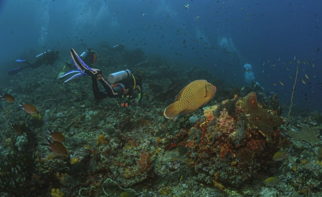 komodo 101 11 1024x627 - Test Samyang 14mm vs Samyang Fisheye 8mm Untuk Underwater