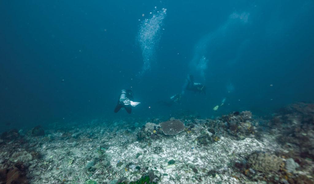 komodo 2811 1024x602 - 10 Diving Spot di Komodo pilihan WidhiBek