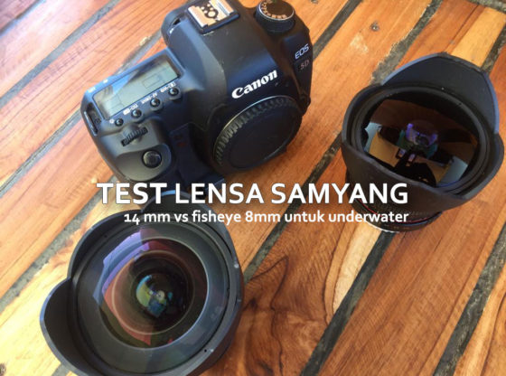 samyang underwater 560x416 - Test Samyang 14mm vs Samyang Fisheye 8mm Untuk Underwater