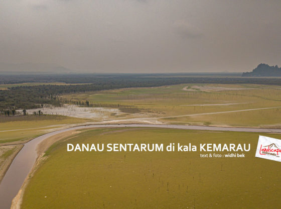 danausentarum kemarau 0 560x416 - Danau Sentarum di kala Kemarau